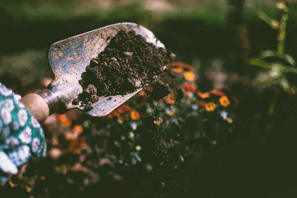 hand holding a spade with topsoil on it